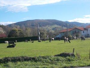 Santa María de Cayón (Cantabria) 025