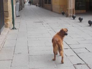 Santo Domingo de la Calzada 016