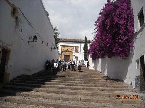 Córdoba. Flower power! (5/6)